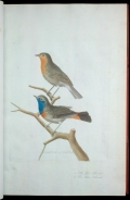 Illustration of two birds on a branch