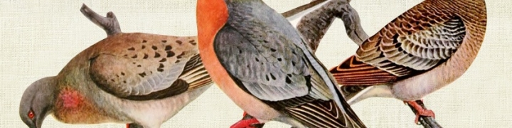 Once There Were Billions: Vanished Birds of North America