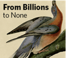 """""""From Billions to None"""" Film Showing & Lecture"""
