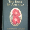 Cover of The Rose in America