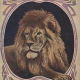 National Zoo Library Logo Image