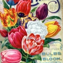 Image of colorful flowers on cover of magazine