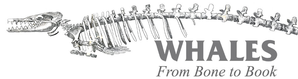 Whales, From Bone to Book banner