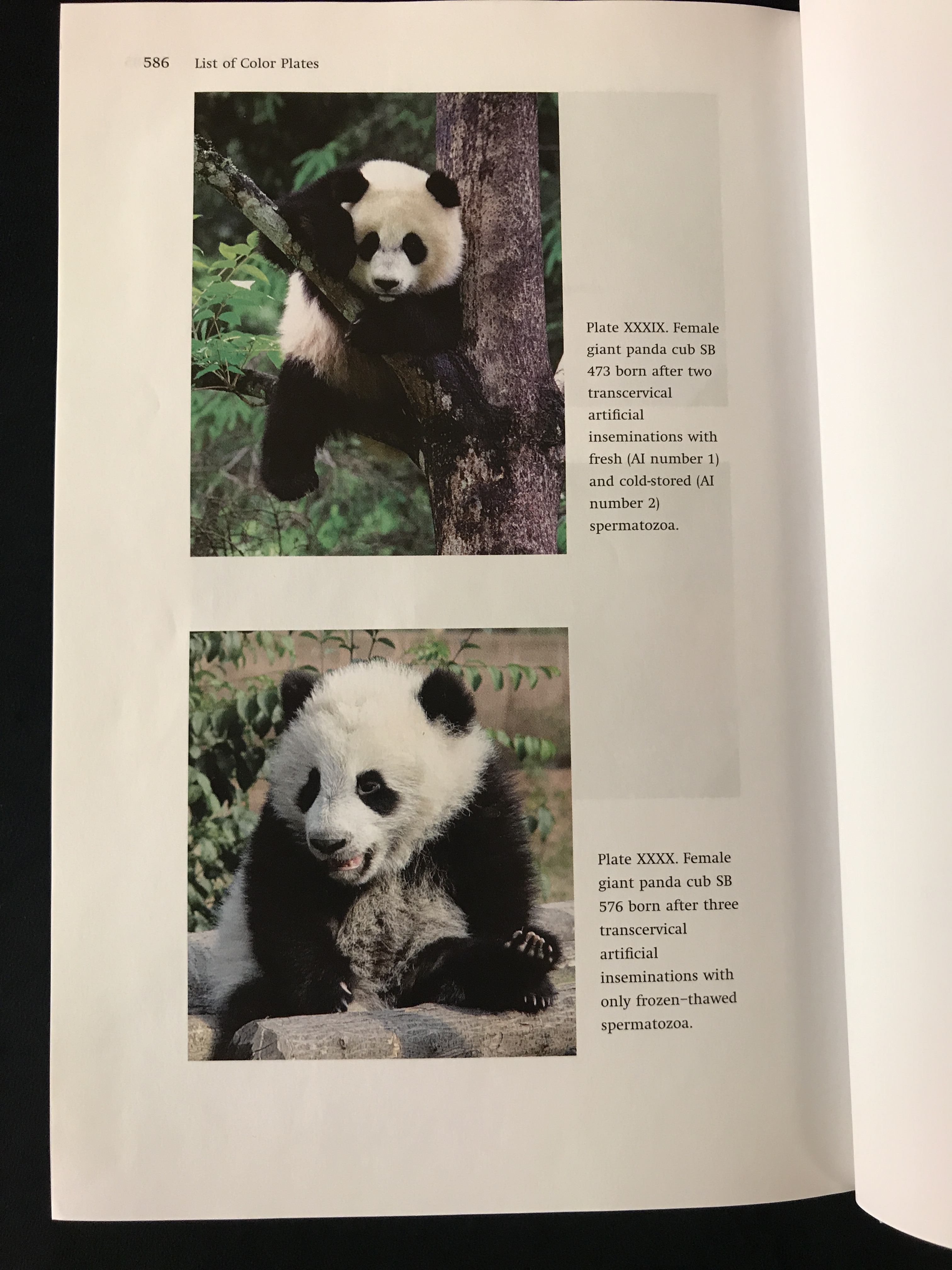 Giant Pandas: Biology, Veterinary Medicine and Management
