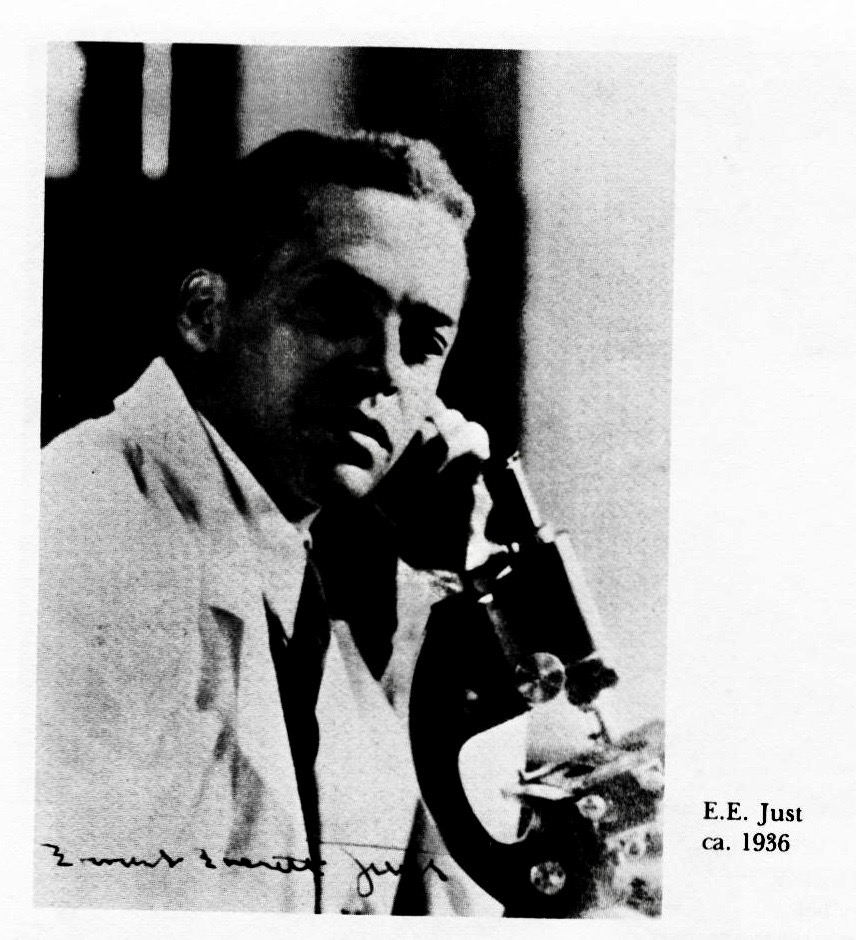 ernest everett justs biography and his contribution to physiology Ernest everett just (august 14, 1883 - october 27, 1941) was a pioneering african-american biologist, academic and science writer just's primary legacy is his recognition of the fundamental role of the cell surface in the development of organisms.
