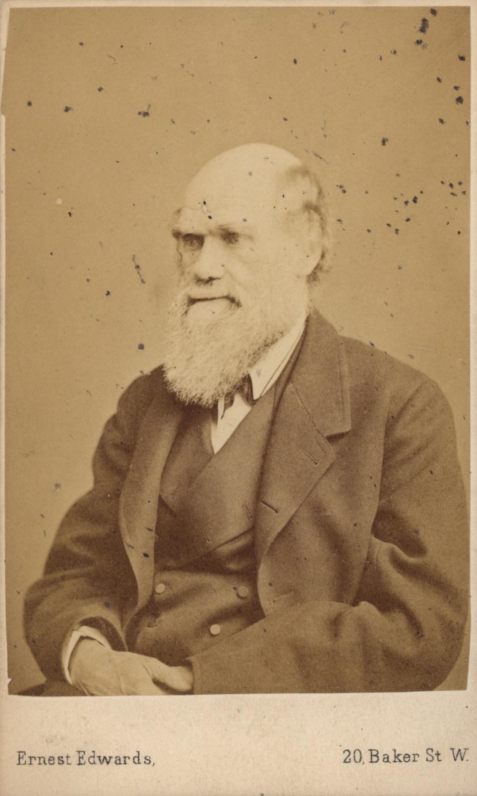 Photographic Portrait Of Charles Darwin Carte De Visite