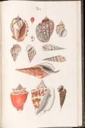 "Cover of ""Prodromus in systema historicum testaceorum"""