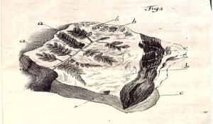 Kurtze Betrachtung derer Kräuterabdrücke im Steinreiche