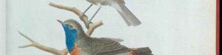 Cover of Ornithologie