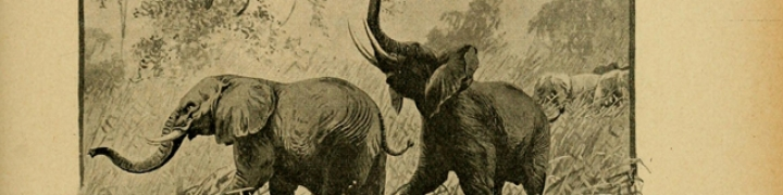 The Art of African Exploration
