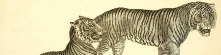 Zoos: A Historical Perspective