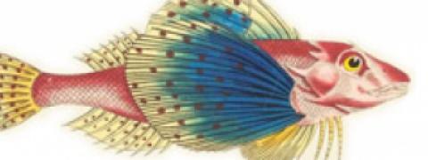 Image of a fish