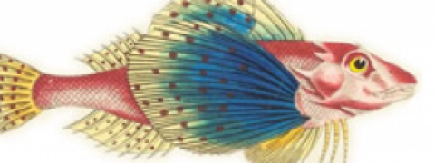 Image of a fish