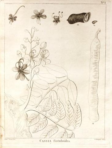 Histoire naturelle et médicale des casses, et particulièrement de la casse et des sénés employés en médecine