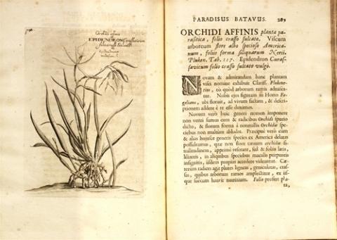 Paradisus batavus, continens plus centum plantas affabre aere incises & descriptionibus illustratas.