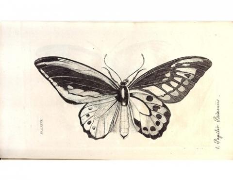 Icones piscium mammalium, insectorum- Indicem systematicum.