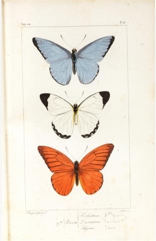 Histoire naturelle des Lepidoptères exotiques