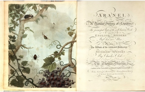 Aranei, or, A natural history of spiders....