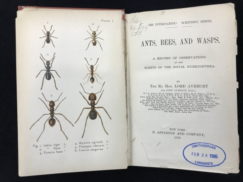 Ants bees wasps_title page