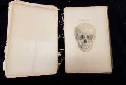 Zur Architectur des Menschenschadels folio book