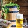 Stein of beer in front of barrel of hops