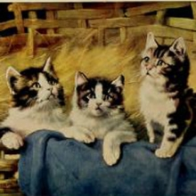 three kittens looking up