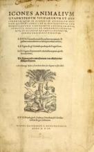 Cover of Icones animalium quadrupedum uiuiparorum et ouiparorum
