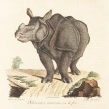 Drawing of rhinoceros.