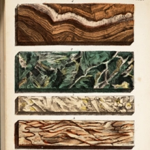 color illustration of cross sections of types of marble