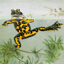 Spotted frog with head peeking out of the water.