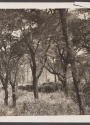Cover of Black and white photograph of African elephant herd in woodland