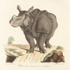 Drawing of rhinoceros.