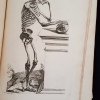 A Plate Depicting a Posed Human Skeleton, from Methode pour Apprendre le Dessein