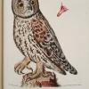 Tabula XXII from Elementa Ornithologica