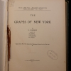 Title page of The Grapes of New York