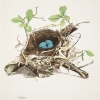 Illustrations of the nests and eggs of birds of Ohio