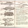 Systema naturae; sistens regna tria naturae, in classes et ordines, genera et species redacta tabulisque aeneis illustrata... (7th ed.)