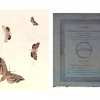 Psyche - Figures of non descript lepidopterous insects, or rare moths and butterflies from different parts of the world
