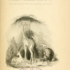 title page of Animals in menageries