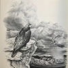 Golden Eagle Country, illustration