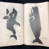 Two black and white whale illustrations from Kumano