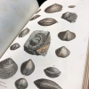 Page of colored shell illustrations