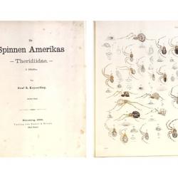 Die Spinnen Amerikas
