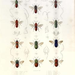 Exploration scientifique de l'Algérie. Zoologie. Histoire naturelle des animaux articulés (3 vols. and atlas)