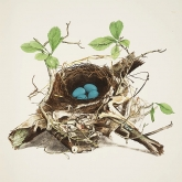 The Illustrations of the Nests and Eggs of Birds of Ohio