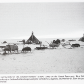 black and white image of Siberian reindeer herder camp with sleds and tents