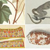 collage of images from various digital editions