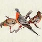 Once There Were Billions- Vanished Birds of North America