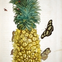 Pineapple with butterflies