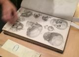 Illustration depicting human skulls from Loder's Anatomische Tafeln....